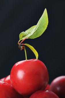 Free Cherry-plum. Stock Photos - 9704303