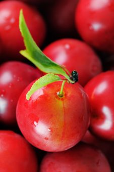 Cherry-plum. Royalty Free Stock Photo
