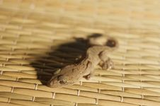Free Gecko On A Beach Mat Royalty Free Stock Photos - 9704848