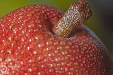 Free Pear Royalty Free Stock Image - 9705586