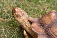 Free Large Turtle Royalty Free Stock Photography - 9705647