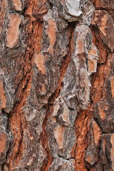 Free Tree Bark Texture Stock Photos - 9706383