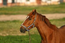Free Horse Portrait Royalty Free Stock Photos - 9707088