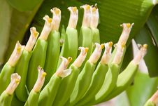 Free Bananas Stock Photography - 9707212