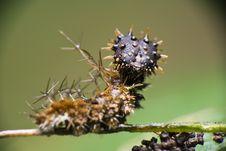 Free Spiky Catterpillar Royalty Free Stock Photo - 9707445