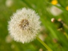 Free Pretty White Ball Of Dandelion Against Stock Image - 9709441
