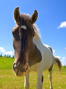 Free Horse  On Green Field Royalty Free Stock Images - 9709489