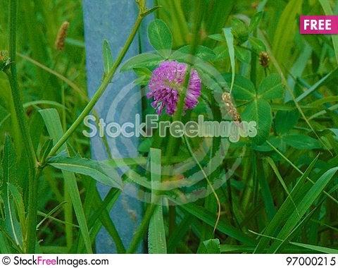 Free Purple Flower Royalty Free Stock Photo - 97000215