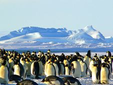 Free Penguin, Flightless Bird, Arctic, Arctic Ocean Stock Images - 97078694