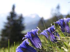 Free Flower, Plant, Purple, Violet Stock Photography - 97088982