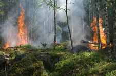 Free Wildfire, Forest, Ecosystem, Vegetation Stock Photos - 97091343