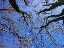 Free Branch, Tree, Sky, Blue Stock Photos - 97093783