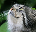 Free Cat Animal Head Close Up Stock Image - 9716371
