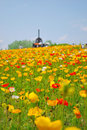 Free Field Of Poppies In Full Bloom Stock Images - 9719054