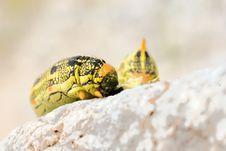 Free Caterpillar Royalty Free Stock Photography - 9710197
