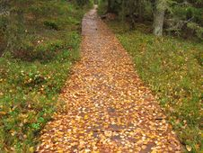 Country Pathway In Autumn Royalty Free Stock Images