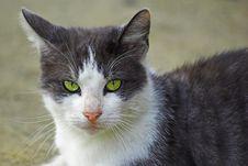Cat S Eyes Stock Photos