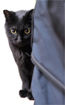 Free Adorable Black Cat Royalty Free Stock Photos - 9711298