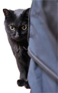 Adorable Black Cat Royalty Free Stock Photos