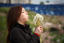 Free The Girl With White Dandelions Royalty Free Stock Photos - 9712018