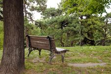Free Wooden Bench In Park Royalty Free Stock Images - 9712119