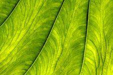 Free Leaf Closeup. Royalty Free Stock Images - 9713119