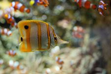 Free Fish Stock Images - 9713924