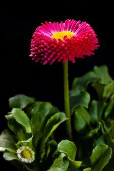 Free Flower Royalty Free Stock Photos - 9714138