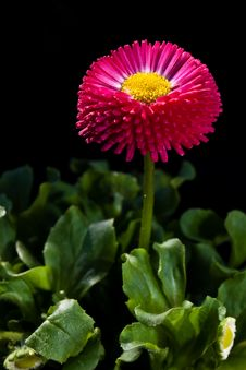 Free Flower Stock Images - 9714234