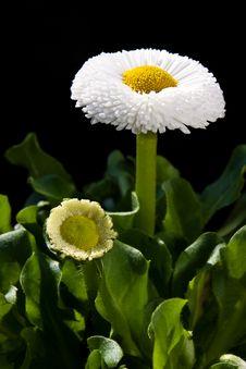Free Flower Stock Photos - 9714253
