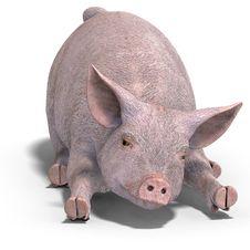Free Piglet Stock Photos - 9715883
