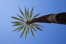 Free Palm Tree Royalty Free Stock Images - 9716559
