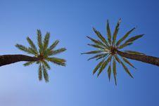 Free Palm Tree Royalty Free Stock Photos - 9716668