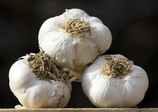 Free Garlic Royalty Free Stock Images - 9716969