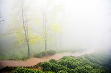Free Two Trees In Thick Fog Royalty Free Stock Photos - 9718908