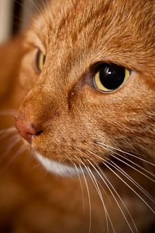 Free Cat Closeup Stock Image - 9719541