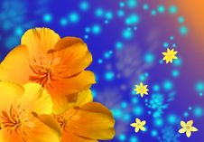 Free Flower Stock Photography - 9719742