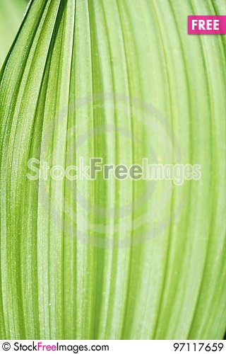 Free Leaf Ribs Royalty Free Stock Images - 97117659