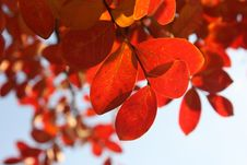 Free Red, Orange, Leaf, Petal Royalty Free Stock Photos - 97141918