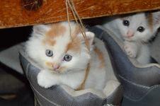 Free Cat, Small To Medium Sized Cats, Mammal, Cat Like Mammal Royalty Free Stock Image - 97143316