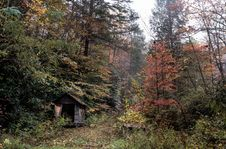 Free Forest Hut Shelter Stock Image - 97145431