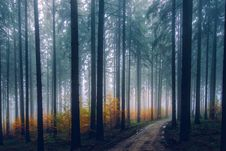 Free Trees In Forest During Sunset Royalty Free Stock Images - 97145439
