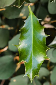 Free Green Leaf In Close Up Photo Royalty Free Stock Photography - 97145537