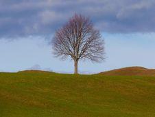 Free Tree, Sky, Grassland, Woody Plant Stock Images - 97157804