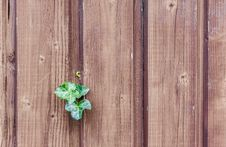 Free Green, Wood, Leaf, Wood Stain Royalty Free Stock Photo - 97175365