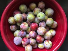 Free 2017/365/210 Plum Bowl Stock Images - 97187284