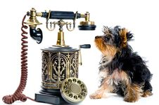 Free Puppy Of A Spitz-dog With Phone Royalty Free Stock Photos - 9720378