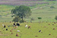 Free The Farm Stock Photos - 9725663