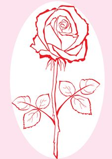 Free Hand Sketched Rose. Stock Images - 9726194
