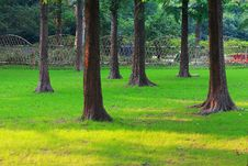Free Trees And Lawn Stock Photo - 9726390